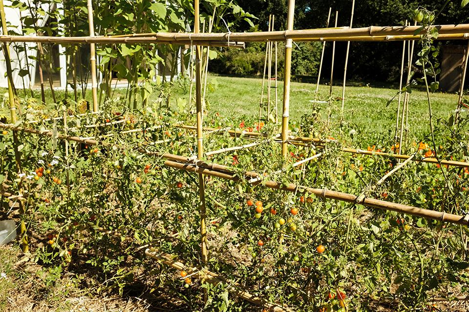 tomatoes garden construction
