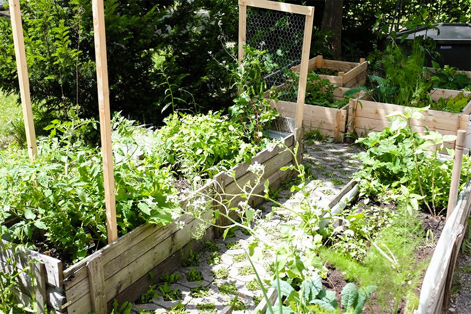 freilich garden