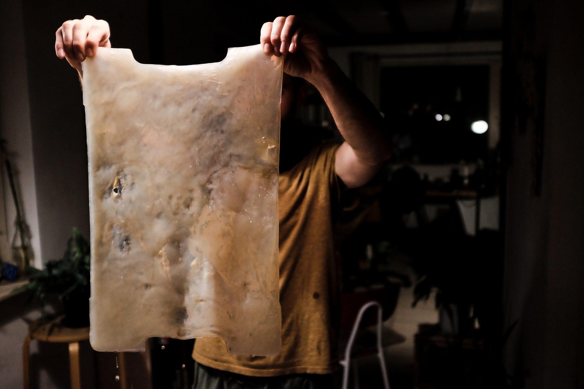 big sheet of kombucha cellulose held up